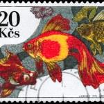 CZECHOSLOVAKIA - CIRCA 1975 Goldfish — Stock Photo #6263775