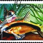 NICARAGUA - CIRCA 1981 Corydoras — Stock Photo
