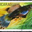 NICARAGUA - CIRCA 1981 Guppy — Stock Photo #6263887
