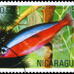 NICARAGUA - CIRCA 1981 Neon — Stock Photo #6263905