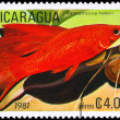 Royalty-Free Stock Photo: NICARAGUA - CIRCA 1981 Platyfish