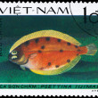 Royalty-Free Stock Photo: VIETNAM - CIRCA 1982 Lefteye Flounder