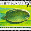 VIETNAM - CIRCA 1982 Peacock Sole — Stock Photo