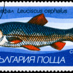 Постер, плакат: BULGARIA CIRCA 1983 Chub
