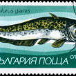 Постер, плакат: BULGARIA CIRCA 1983 Catfish