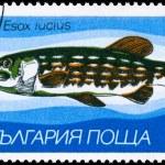 Постер, плакат: BULGARIA CIRCA 1983 Pike