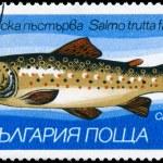 Постер, плакат: BULGARIA CIRCA 1983 Trout