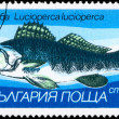 BULGARIA - CIRCA 1983 Zander - Stock Photo