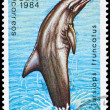 CUB- CIRC1984 Bottlenose Dolphin — Stock Photo #6264159