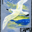 USSR - CIRCA 1978 Whitewinged Petrel - Stock Photo