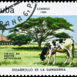 CUBA - CIRCA 1984 Artificial pastures — Stock Photo