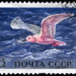 USSR - CIRC1972 Pink Gull — Stock Photo #6266494