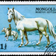 Stock Photo: MONGOLI- CIRC1977 White Stallion