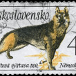 CZECHOSLOVAKIA - CIRCA 1965 German Shepherd - Stock Photo