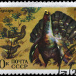 USSR - CIRCA 1975 Wood Grouse - Stock Photo