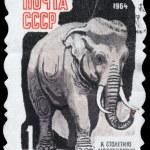 USSR - CIRCA 1964 Elephant — Stock Photo