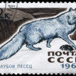 USSR - CIRCA 1967 Blue Fox — Stock Photo