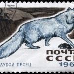 USSR - CIRCA 1967 Blue Fox — Stock Photo #6267461