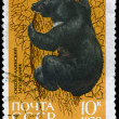 USSR - CIRCA 1970 Black Bear — Stock Photo