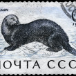 Royalty-Free Stock Photo: USSR - CIRCA 1971 Sea Otter
