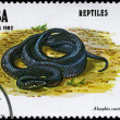 CUBA - CIRCA 1982 Snake — Stock Photo