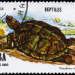 CUBA - CIRCA 1982 Tortoise — Stock Photo