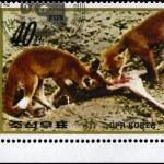 Постер, плакат: NORTH KOREA CIRCA 1984 Foxes