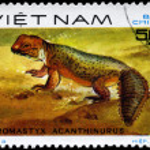 Постер, плакат: VIETNAM CIRCA 1983 Uromastyx