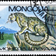 MONGOLIA - CIRCA 1985 Leopard on the Rock - Stock Photo
