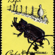 CUBA - CIRCA 1980 Rhino Beetle - Stock Photo