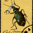 CUBA - CIRCA 1980 Ground Beetle — Stock Photo
