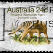 AUSTRALIA - CIRCA 1981 Tasmanian Tiger - Stock Photo