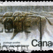 CANADA - CIRCA 1981 Bison - Stock Photo