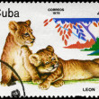CUBA - CIRCA 1979 Lion cubs — Stock Photo