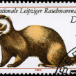 GDR - CIRCA 1982 Polecat — Stock Photo