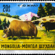 MONGOLIA - CIRCA 1971 Yaks - Stock Photo