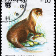 POLAND - CIRCA 1984 Otter — Stock Photo