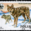 POLAND - CIRCA 1985 Wolf - Stock Photo
