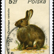 POLAND - CIRCA 1986 Rabbit — Stock Photo