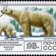 USSR - CIRCA 1977 Polar Bear — Stock Photo