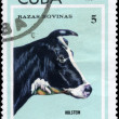 CUBA - CIRCA 1973 Holstein — Stock Photo