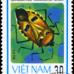 Постер, плакат: VIETNAM CIRCA 1982 Stink Bug