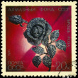 USSR - CIRCA 1971 Diamond Rose - Stock Photo