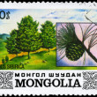 MONGOLIA - CIRCA 1982 Siberian Pine — Stock Photo