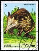 CUBA - CIRCA 1984 Solenodon — Stock Photo