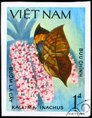 VIETNAM - CIRCA 1983 Kallima — Foto de Stock