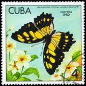 キューバ - 1982 metamorpha 年頃 — ストック写真