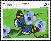 CUBA - CIRCA 1984 Heliconius — Stock Photo