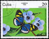 CUBA - CIRCA 1984 Heliconius — Stock Photo