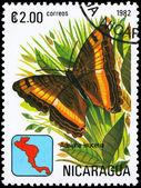 NICARAGUA - CIRCA 1982 Adelpha — Stock Photo